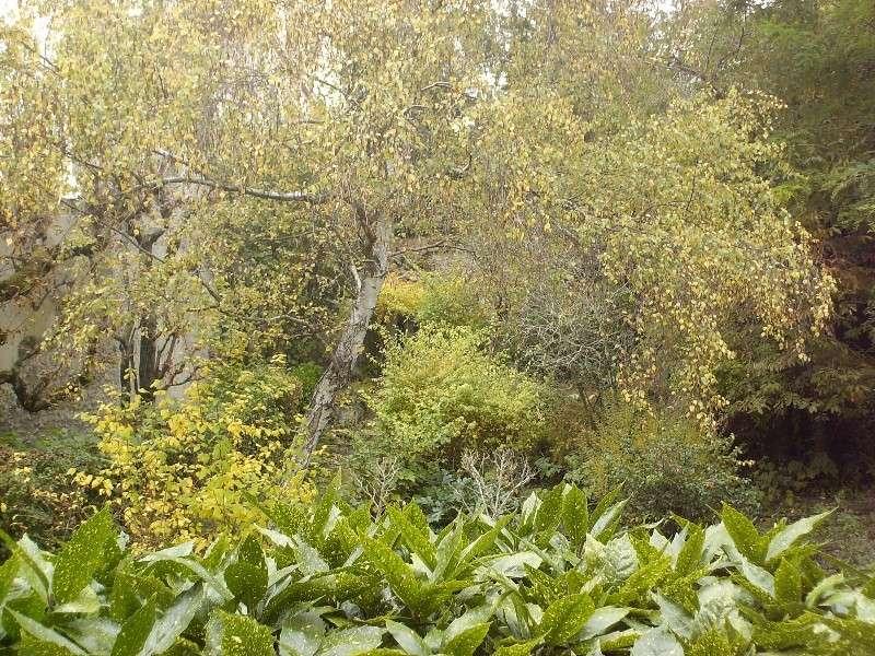 Betula pendula - Bouleau Hpim3510