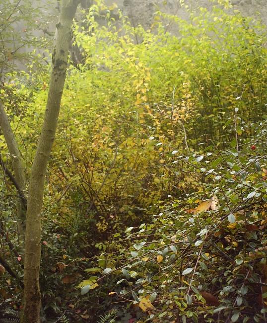 Quelques vues d'automne Hpim8010
