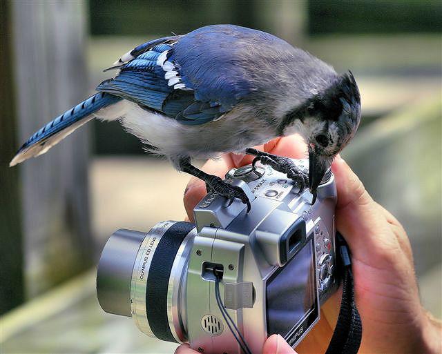 un oiseau bien curieux! 77343510