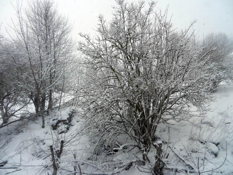 Encore du blanc ..... 2013-210