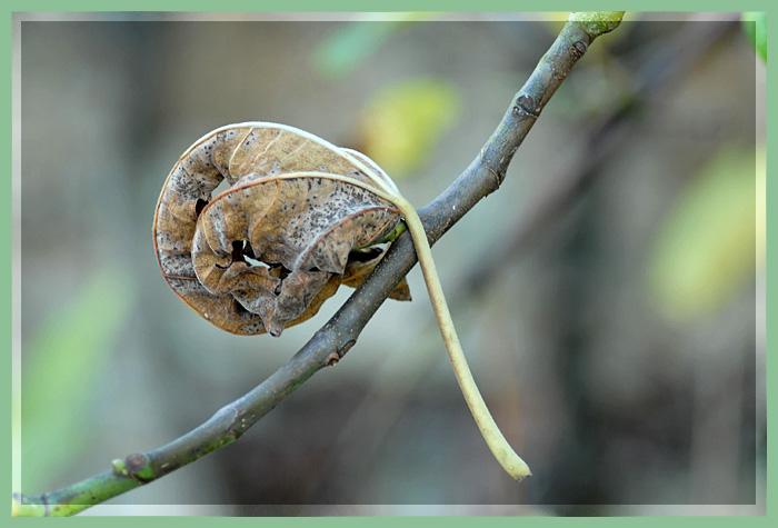 dans l'arbre .. Dsc_1410