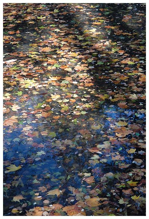 les feuilles mortes .. Dsc_1510