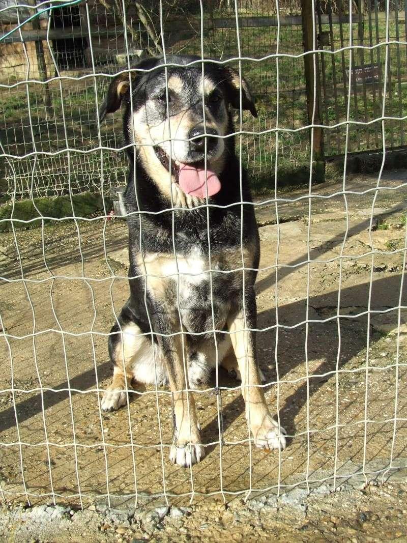 BEUCK, X labrador - beauceron -02/2006- (33) Beuck910