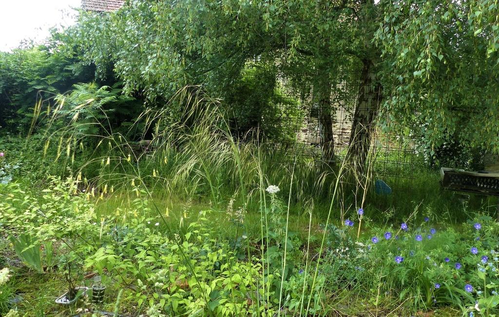le jardin de l'abbaye en 2018 - Page 6 P1030828