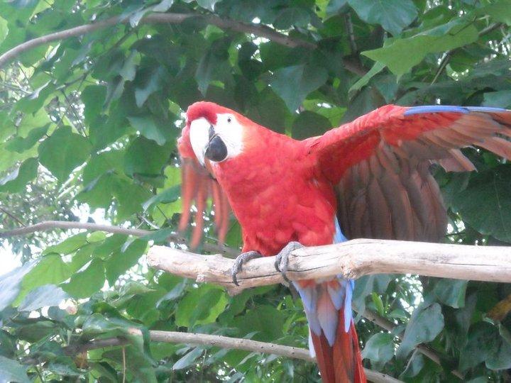 Photography Birdy10
