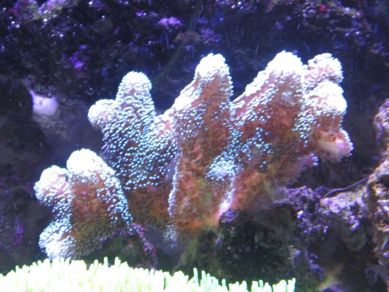 Nano eau de mer - Page 2 Img_1011