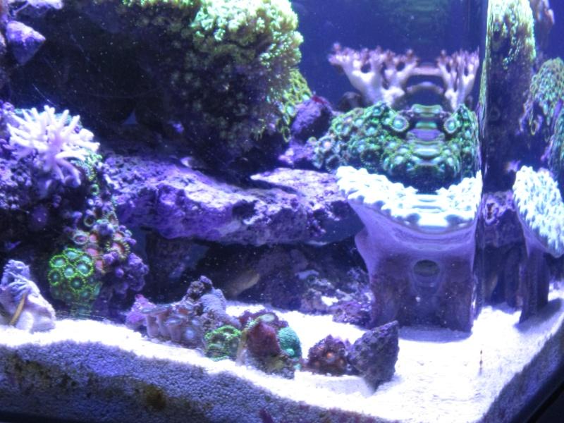 Nano eau de mer - Page 2 Img_1022