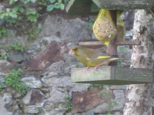 Les oiseaux Img_2110