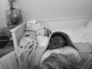 bébé rat a adopter !! marseille - Page 4 11170810