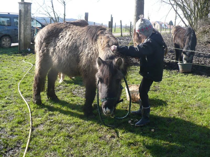 BISCOTTE -  ONC Poney née en 1983 - Protégée GPLV Biscot13