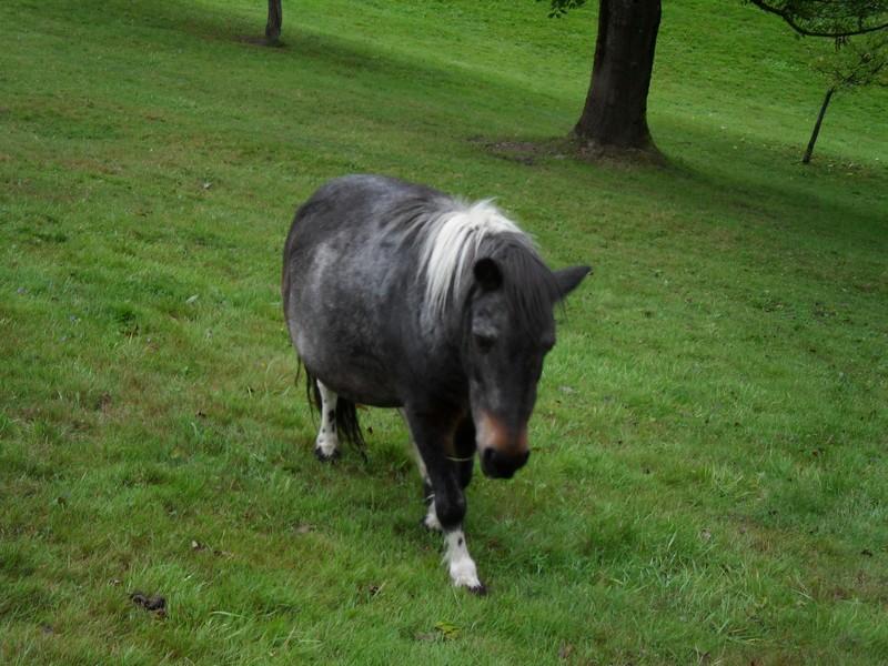 PRUNELLE - ONC poney née en 1986  - adoptée en octobre 2012 par Prosper - Page 4 Prunel10