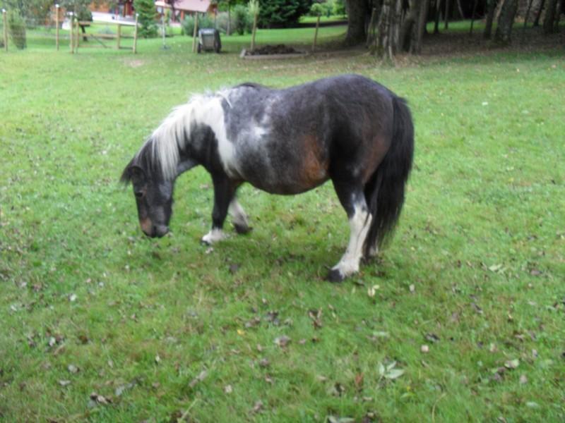PRUNELLE - ONC poney née en 1986  - adoptée en octobre 2012 par Prosper - Page 4 Prunel11