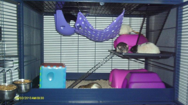 Photos de vos cages - Page 37 Imag0075