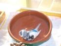 le bain des pioux - Page 3 100_2516