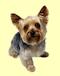 El Mundo Animal - Foro y adopciones de animales Perros10