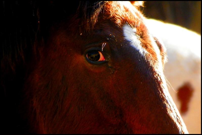 CONCOURS PHOTOS, L'oeil des chevaux ! - Page 2 Aldaoe10