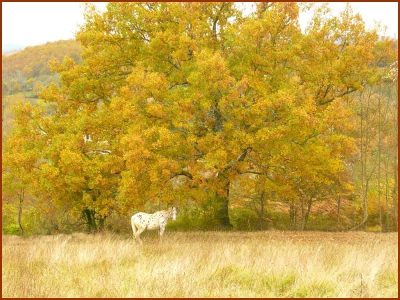L'automne et Napaloose Automn10