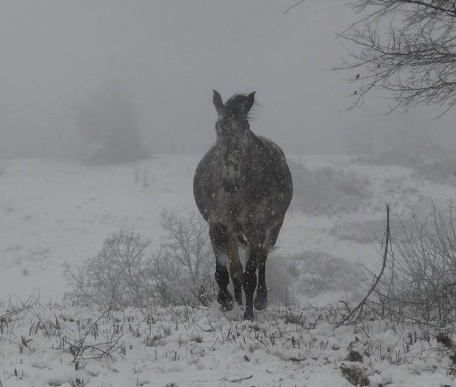 Mes appaloosas dans la neige ! P1020512
