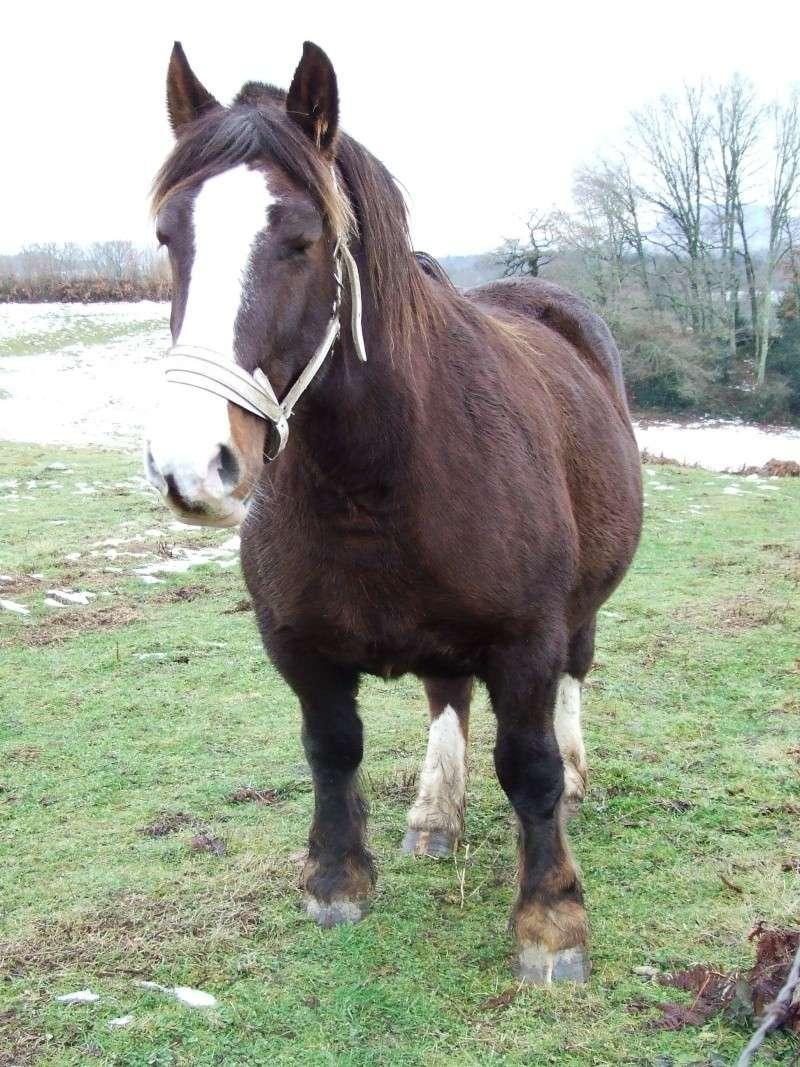 Mon élevage breton Photo139