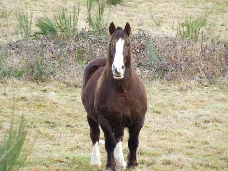 Mon élevage breton Photo145