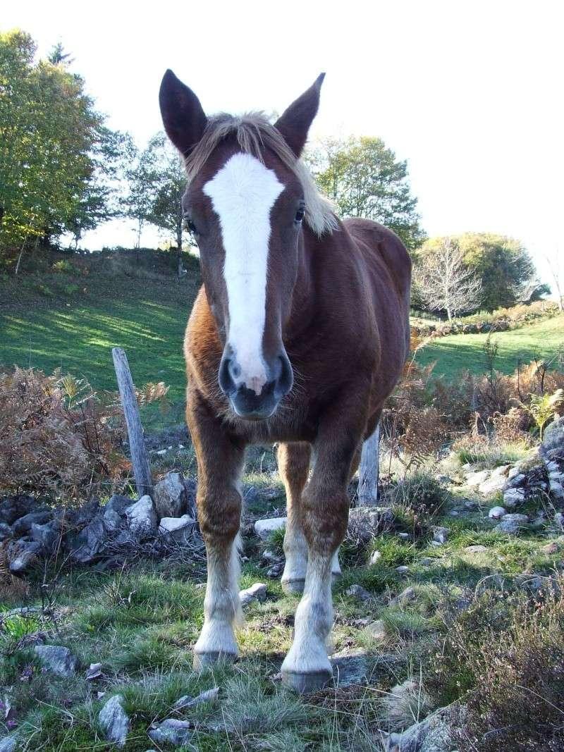 Mon élevage breton Photo_53