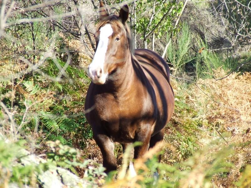 Mon élevage breton Photo_54