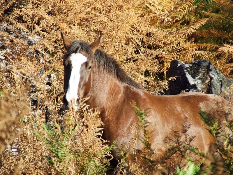 Mon élevage breton Photo_86