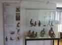 Exotik über dem Nierentisch - Stadtmuseum Einbeck Goldsc25