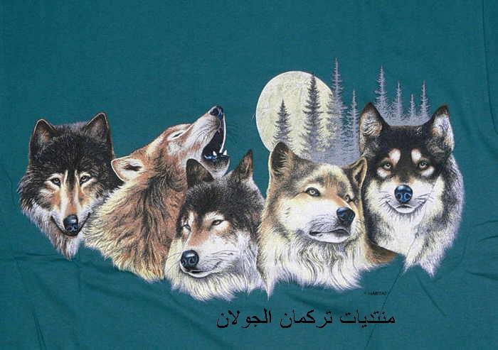 bozkurt الذئاب3 S483wo10