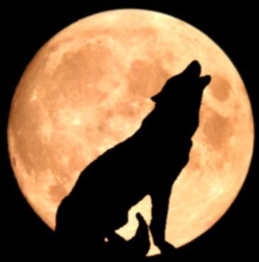bozkurt الذئاب3 Wolf_b10