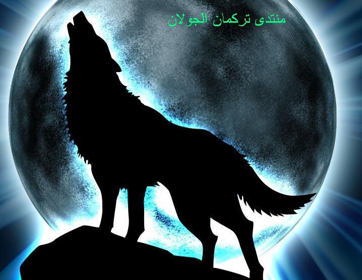 bozkurt الذئاب3 Wolfs211
