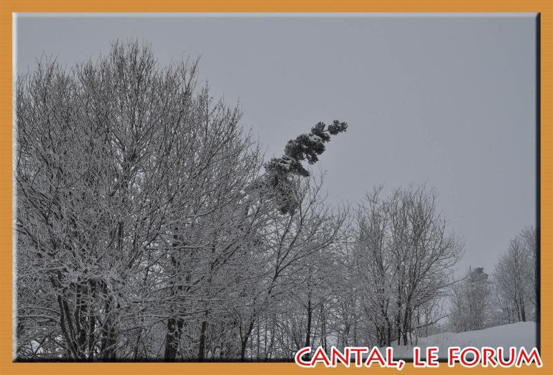 Le Cézallier en vrac Dsc_5216