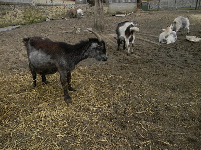 La ferme aux autruches Dscn1210