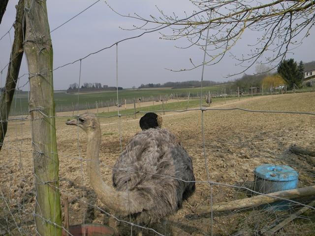 La ferme aux autruches Dscn1214