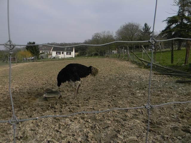 La ferme aux autruches Dscn1215