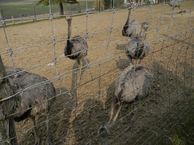 La ferme aux autruches Dscn1223