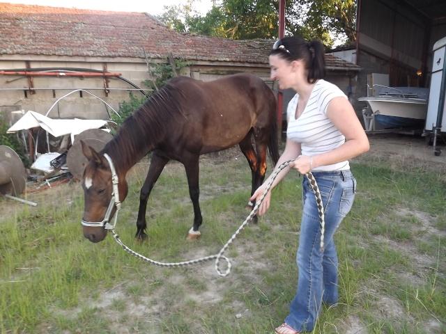 (dept 24) A ADOPTER, JOYEUSE, Trotteur Français, née en 1997, bai brune, NON MONTABLE (en famille d'accueil chez Esther) Photo_25