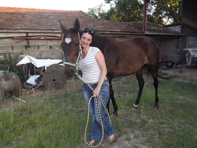 (dept 24) A ADOPTER, JOYEUSE, Trotteur Français, née en 1997, bai brune, NON MONTABLE (en famille d'accueil chez Esther) Photo_26