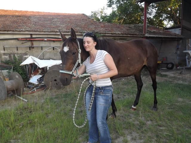 (dept 24) A ADOPTER, JOYEUSE, Trotteur Français, née en 1997, bai brune, NON MONTABLE (en famille d'accueil chez Esther) Photo_27
