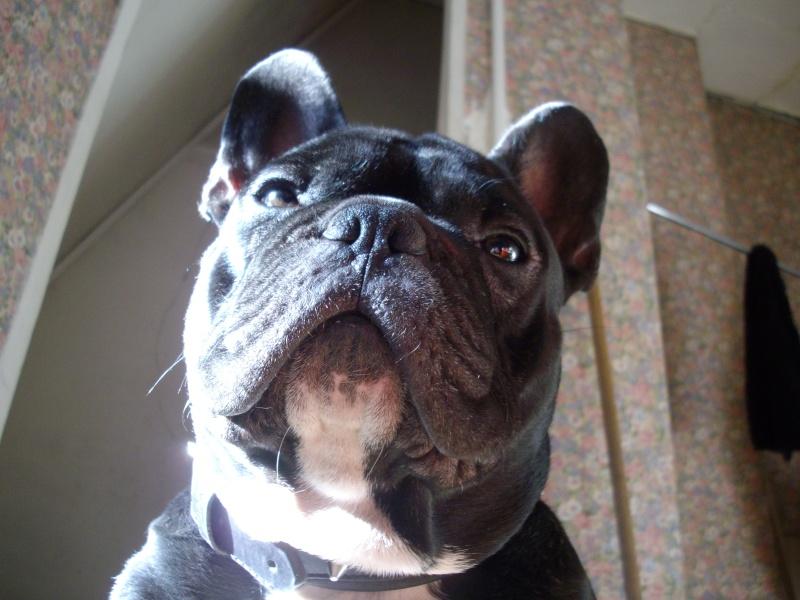 quand les gens confonde vos chiens avec une autre race!!! - Page 3 06612