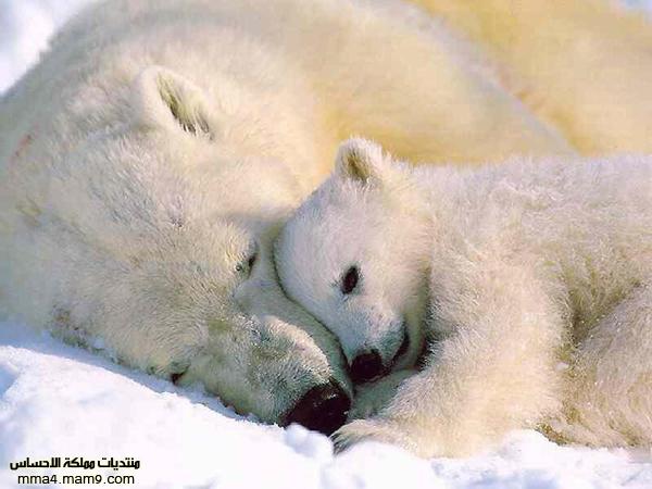 صور لحيوانات روعة , أحلى صور طريفة  1010