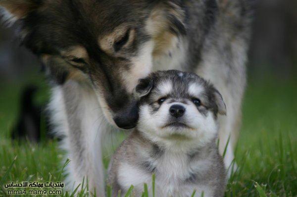 صور لحيوانات روعة , أحلى صور طريفة  410