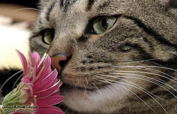 صور لحيوانات روعة , أحلى صور طريفة  710