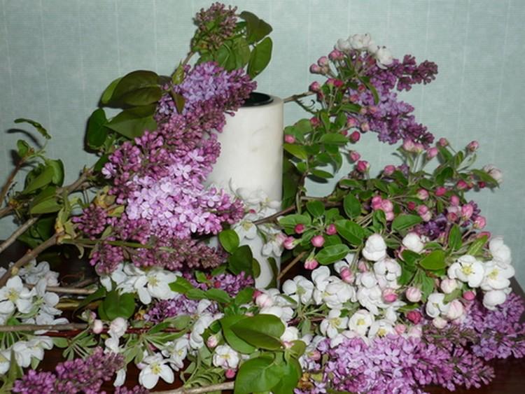 brin de lilas 6994611