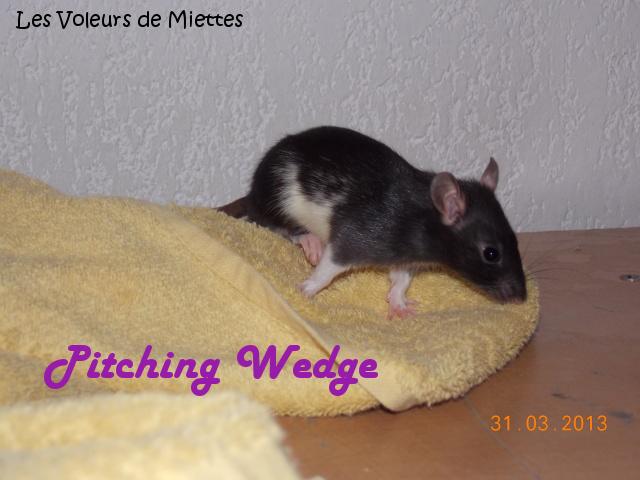 [Animaux] Les voleurs de Miettes, élevage de rats domestiques Kza_pi10