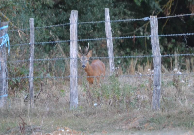 Belles photos d'animaux c'est ici !  - Page 9 Dsc_0012