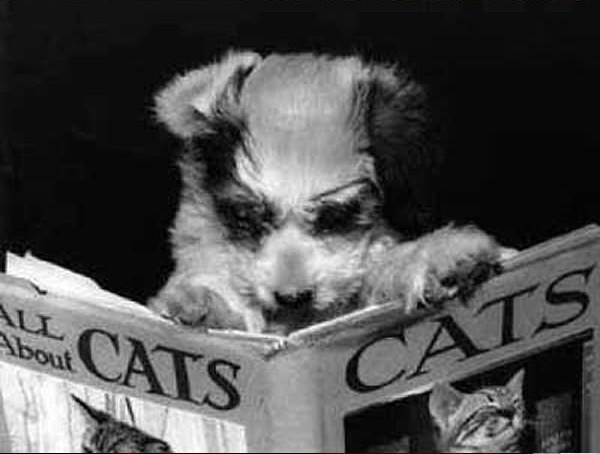 12 kiểu đọc sách của chó và mèo 1010