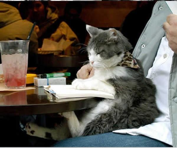 12 kiểu đọc sách của chó và mèo 1110