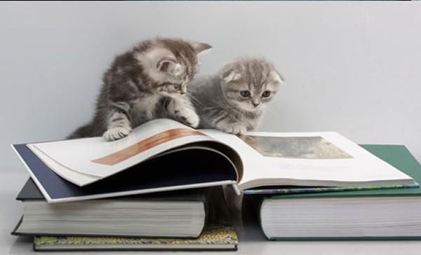 12 kiểu đọc sách của chó và mèo 1210