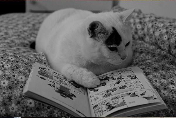 12 kiểu đọc sách của chó và mèo 410